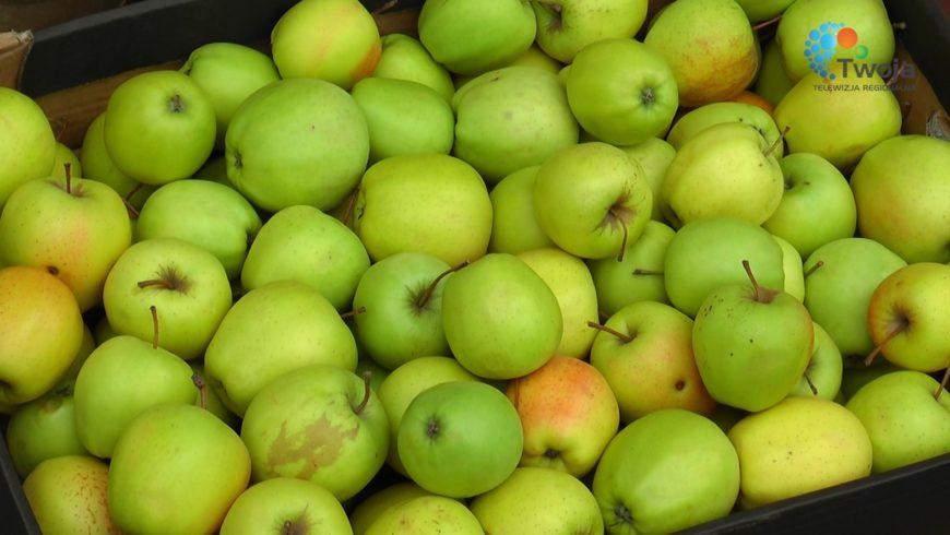 Wydawanie jabłek w Choroszczy przez MOPS