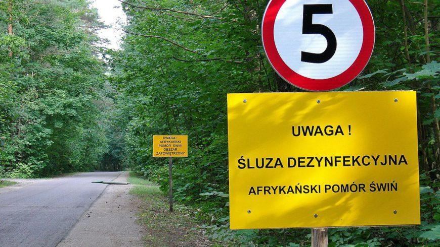 ASF: rozporządzenie Wojewody Podlaskiego znosi strefy zagrożenia i zapowietrzenia
