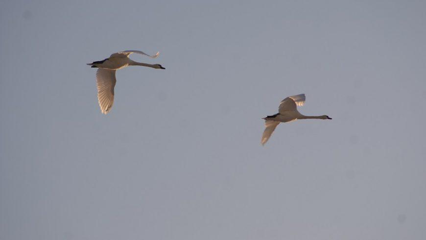 Ptasia wystawa w M-GCKiS w Choroszczy