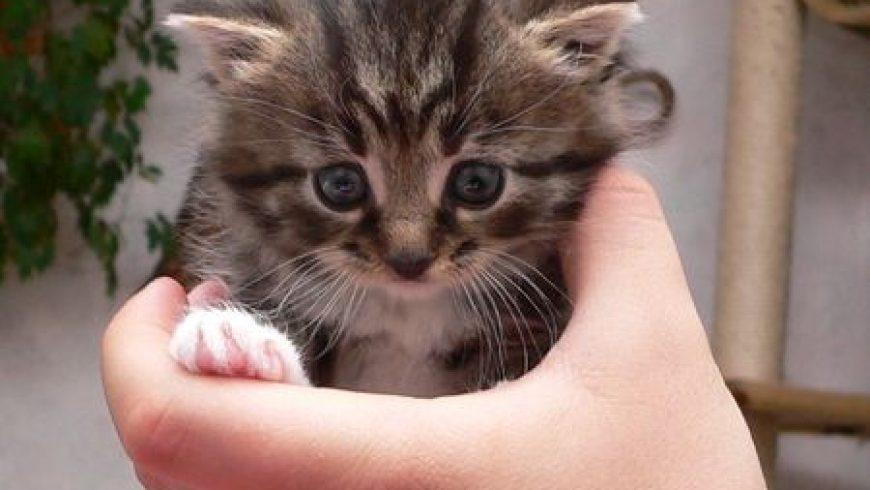 Białystok pomaga kotom